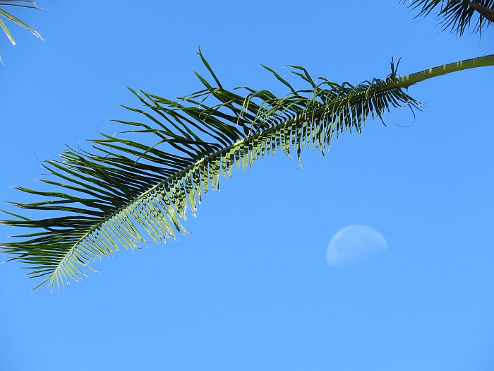 Midday Moon over the Big Island