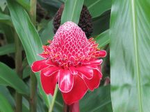 Flower at Akaka Falls