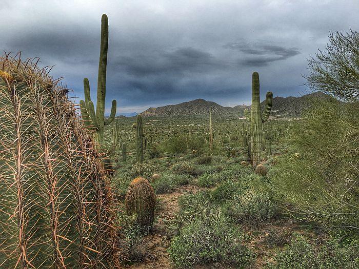 Desrt Cactus Usery Regional Park