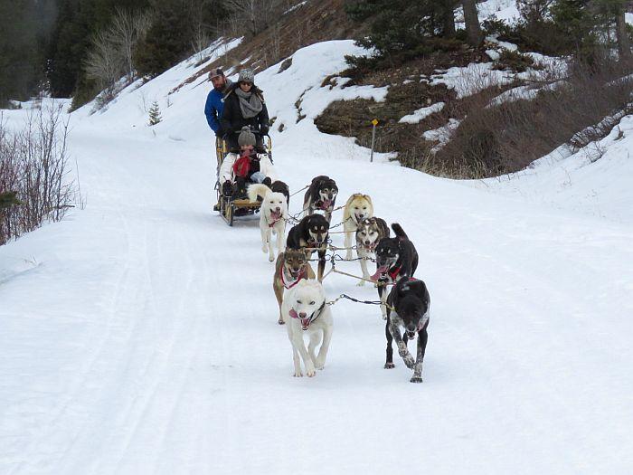 Absaroka Dogsled Treks