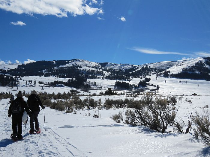 Snowshoeing in Yellowstone National Park with Flying Pig Adventures