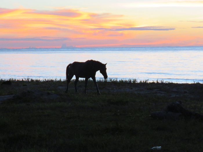 Corn Island, Nicaragua, Horse at sunset