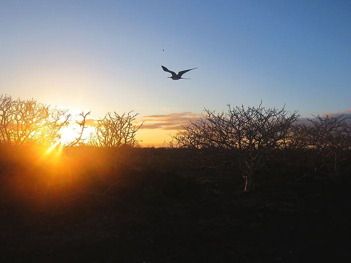 Sunset over North Seymour Island