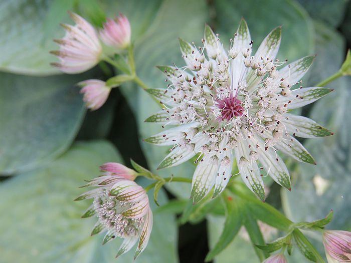 blooms at Butchart Gardens Victoria, BC