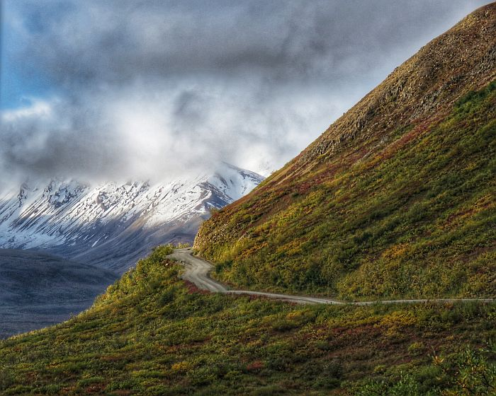 solo road in Denali National Park